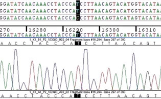 Graphic of nucleotide sequence data.